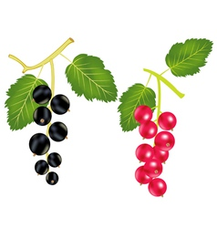 much berries vector image