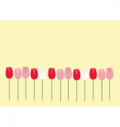 multicolor tulips vector image