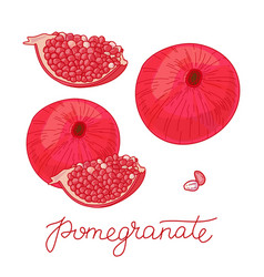 pomegranate fruit set vector image
