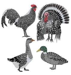 set stylized farm birds a collection vector image