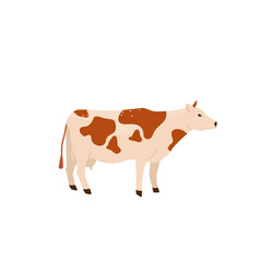 spotted red and white cow stand vector image