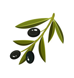 Sprig with three fresh black olives and bright vector