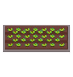 vegetable garden flat plants in garden vector image