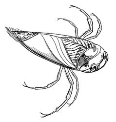 Water beetle vector image