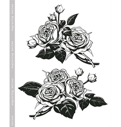 Hand sketched set of white roses in vintage style vector image vector image