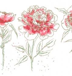 three drawn peony vector image