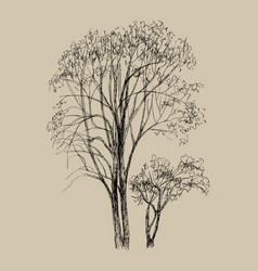 hand drawn two tree vector image
