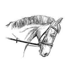 Horse portrait with bridle vector
