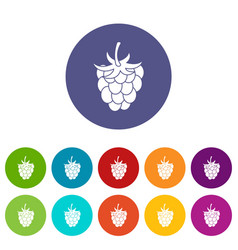 blueberries icons set flat vector image