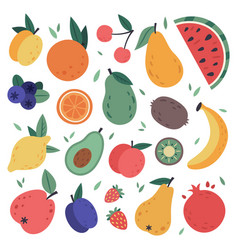 hand drawn fruits doodle harvest citrus avocado vector image