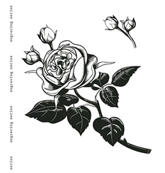 Hand sketched wintage rose in engraving style vector image