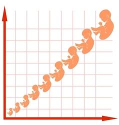 Human Fetus Growth Chart vector image