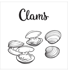 Raw clams isolated on white background vector
