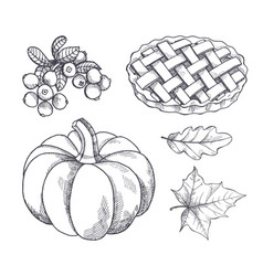 pumpkin and baked pie cranberry sketches vector image