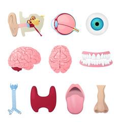 human anatomy organs medical vector image