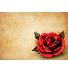 Retro background with beautiful red rose with buds vector image vector image
