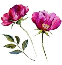 Nice watercolor flowers vector image vector image