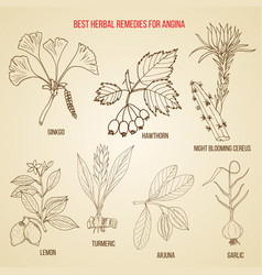 Collection of herbs for angina treatment hand vector