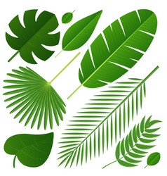 different tropical leaves on white vector image