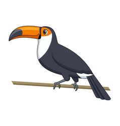 toucan bird on a white background cartoon style vector image