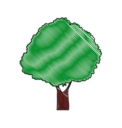 Tree plant foliage bush forest natural vector