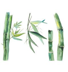 watercolor bamboo vector image