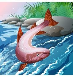 Salmon Creek vector image