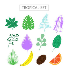 set with tropical leaves and fruits icons vector image