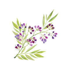 a branch of beautiful delicate purple flowers with vector image