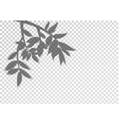 a transparent shadow silhouette from tree vector image