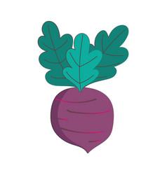 beet vegetable fresh nutrition healthy food vector image