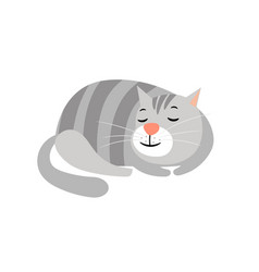 Cute cat domestic gray striped cat animal vector
