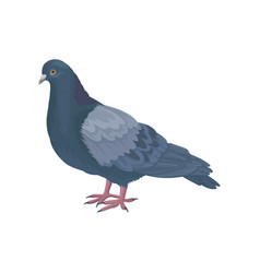 Detailed icon of pigeon dove bird with vector