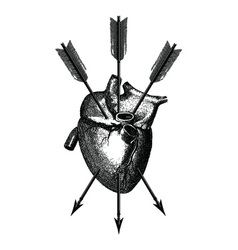 Heart and Arrows vector image