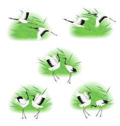Red-crowned cranes in reed thickets vector