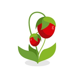 Red strawberries with green stems Juicy Berry with vector image
