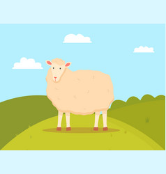 young sheep domesticated ruminant animal mutton vector image