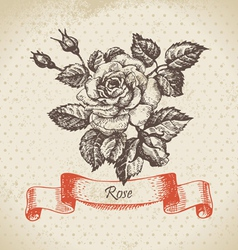 Rose hand drawn vintage design vector image