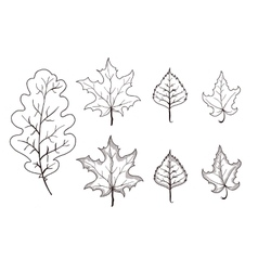 Set of leaves outlines Maple oak birch vector image