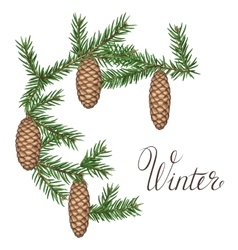 Wreath with fir branches and cones Detailed vector image
