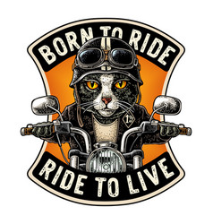 Cat driving a motorcycle rides vintage vector