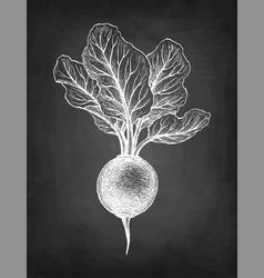 Chalk sketch beetroot vector