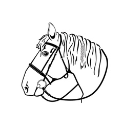 Horse head in harness black and white drawing vector