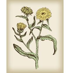 medicinal plant vintage vector image vector image