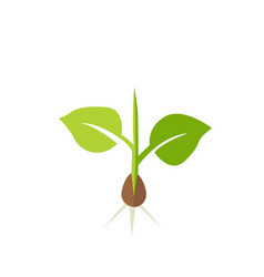 plant seedling vector image