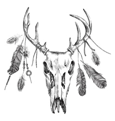 with deer scull and feathers vector image vector image
