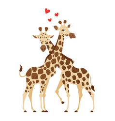 cartoon style of two giraffes vector image