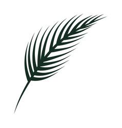 Nature leaf cartoon vector