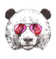 sketch giant panda with sunglasses vector image