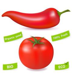 chili pepper and tomato vector image